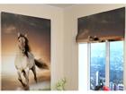 Pimentävä laskosverho HORSE 60x60 cm ED-108856