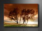 Seinätaulu TREES 120x80 cm ED-114374