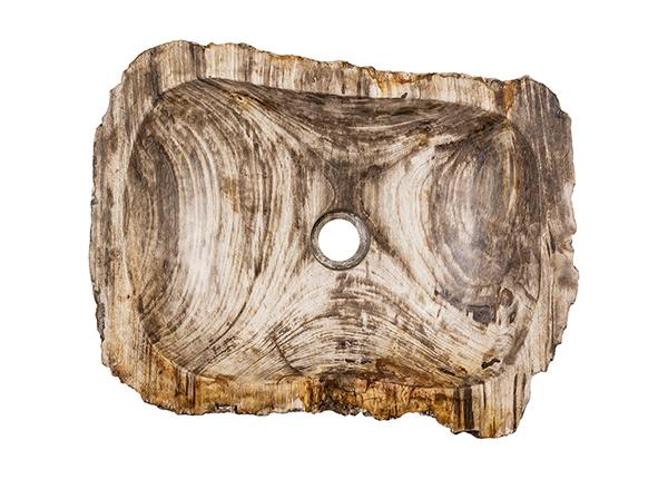 Pesuallas kivettynyttä puuta GM-139973