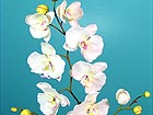 Orkidea PHALAENOPSIS, 2 kpl DA-36412