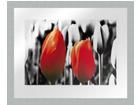 Taulu MODERN - TWO RED TULIPS1 20x25 cm OG-37970
