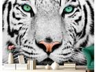 Kuvatapetti WHITE TIGER 280x200 cm ED-76595