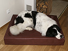Koiranpeti 100x120 cm OL-8547
