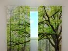 Puolipimentävä verho GREEN TREE 240x220 cm ED-98150