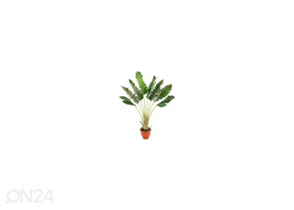 Banaanipuu 170 cm DA-44569