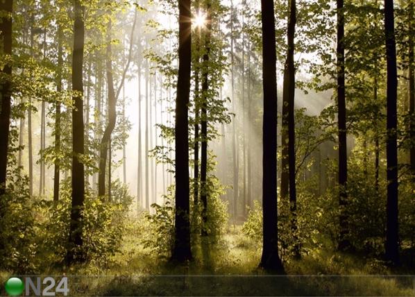 Fleece kuvatapetti FOREST 3 360x270 cm ED-94827
